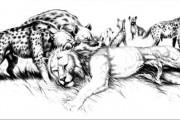 heyans vs lion