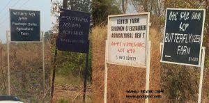 tigriyan-controlled-farmland-in-gambella